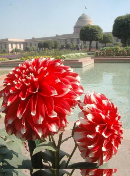 jardin indiajpg