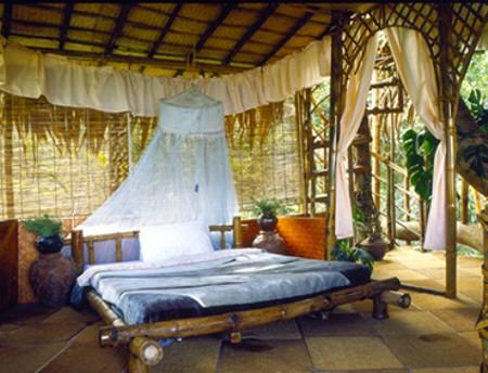 http://india.pordescubrir.com/wp-content/uploads/2008/12/hotel-arbol.jpg